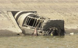 the-sewer-that-ends-in-the-mekong-river