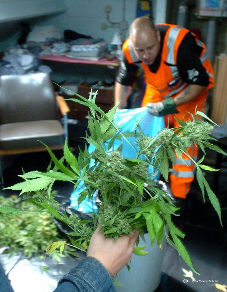drug-raid